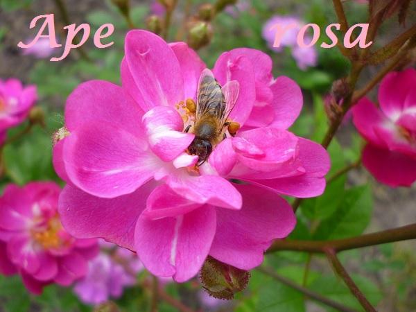 ape social per donne